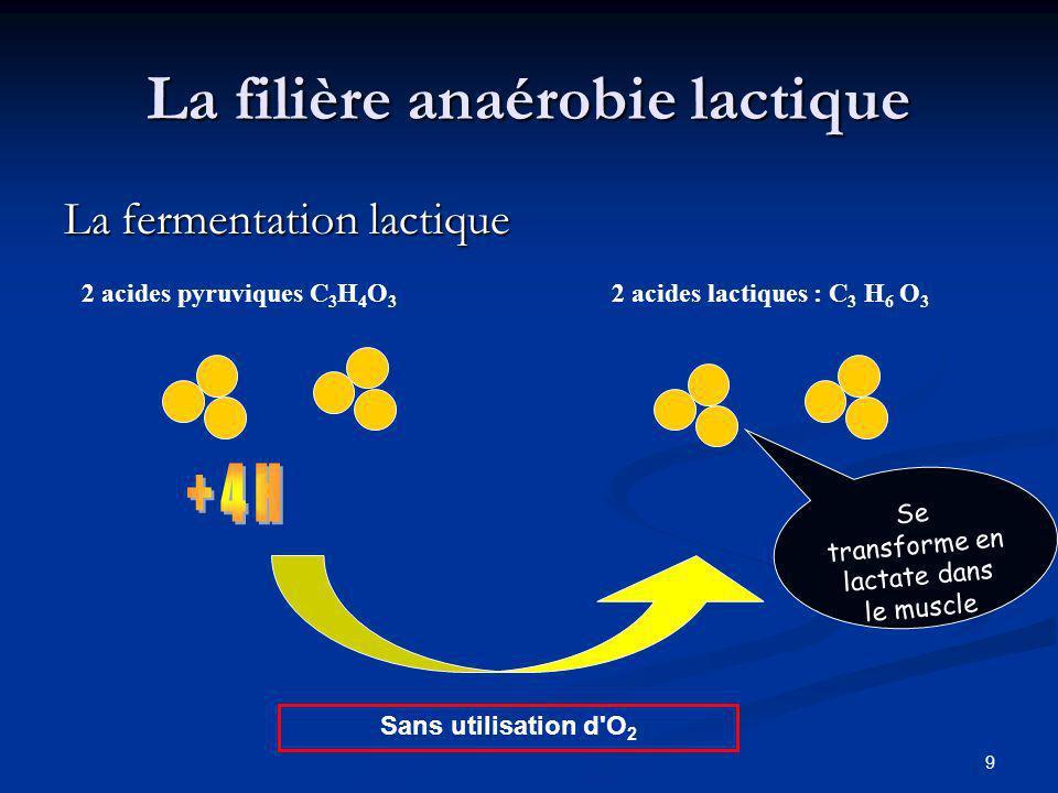 9 La filière anaérobie lactique La fermentation lactique 2 acides pyruviques C 3 H 4 O 3 2 acides lactiques : C 3 H 6 O 3 Sans utilisation d'O 2 Se tr