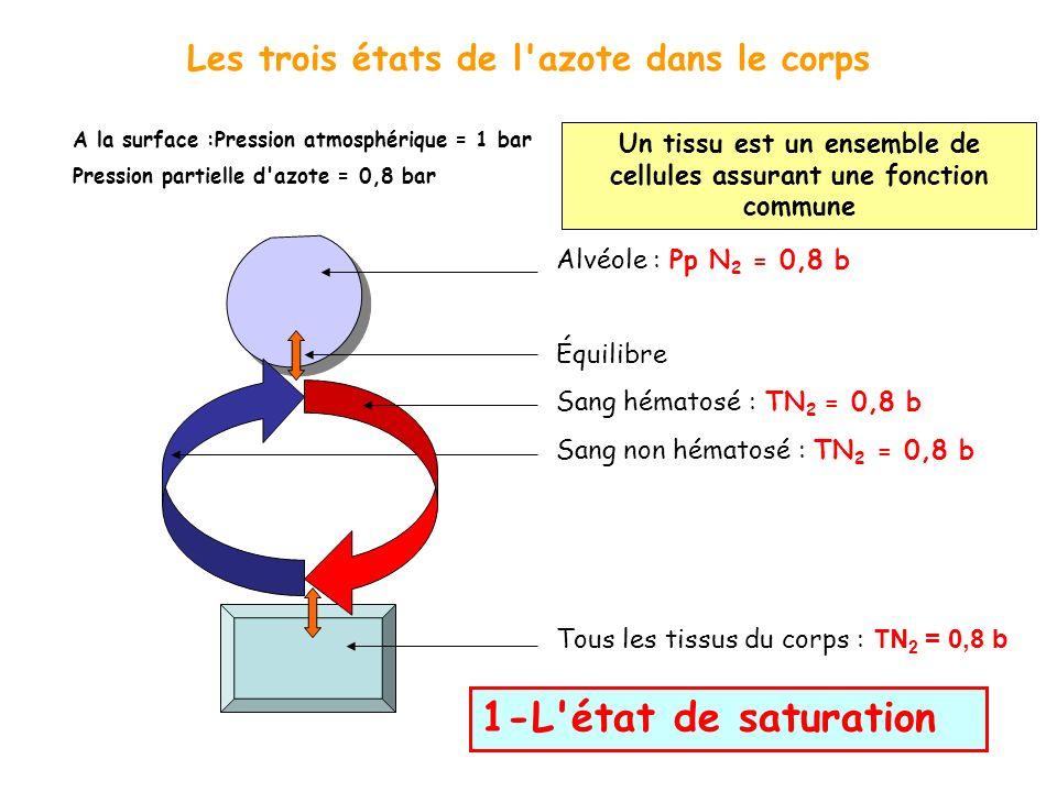 Les trois états de l'azote dans le corps A la surface :Pression atmosphérique = 1 bar Pression partielle d'azote = 0,8 bar 1-L'état de saturation Alvé