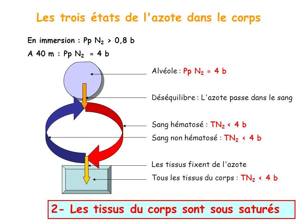 Les trois états de l'azote dans le corps En immersion : Pp N 2 > 0,8 b A 40 m : Pp N 2 = 4 b 2- Les tissus du corps sont sous saturés Alvéole : Pp N 2