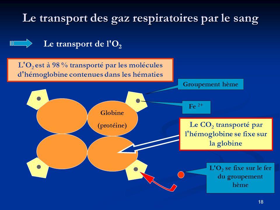 18 Le transport des gaz respiratoires par le sang L'O 2 est à 98 % transporté par les molécules d'hémoglobine contenues dans les hématies Le transport
