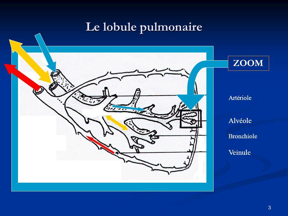 3 Le lobule pulmonaire ZOOM Alvéole Bronchiole Artériole Veinule