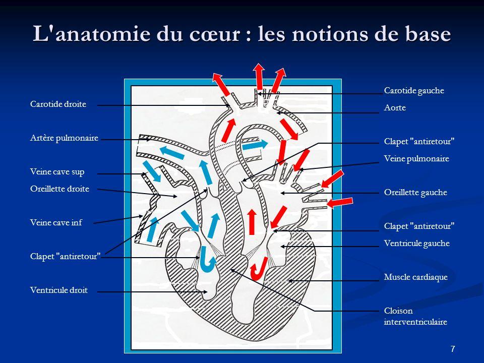 7 L'anatomie du cœur : les notions de base Carotide droite Artère pulmonaire Veine cave sup Oreillette droite Veine cave inf Clapet