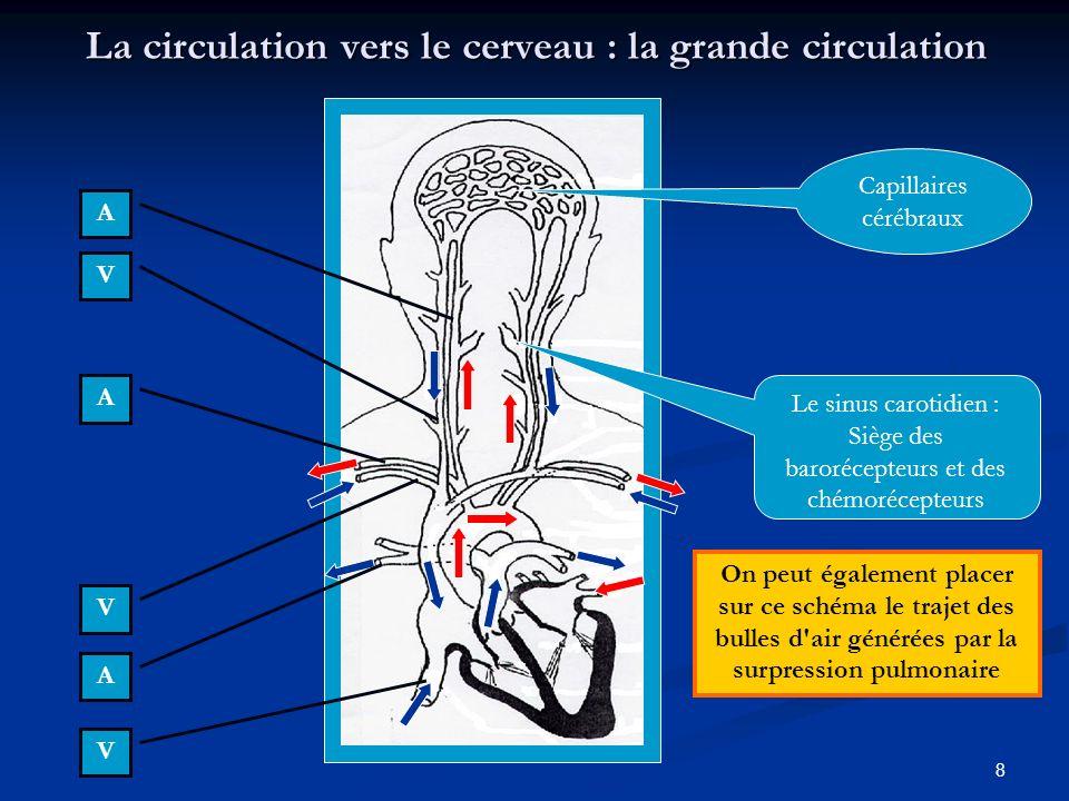 8 La circulation vers le cerveau : la grande circulation V A A A V V Le sinus carotidien : Siège des barorécepteurs et des chémorécepteurs Capillaires