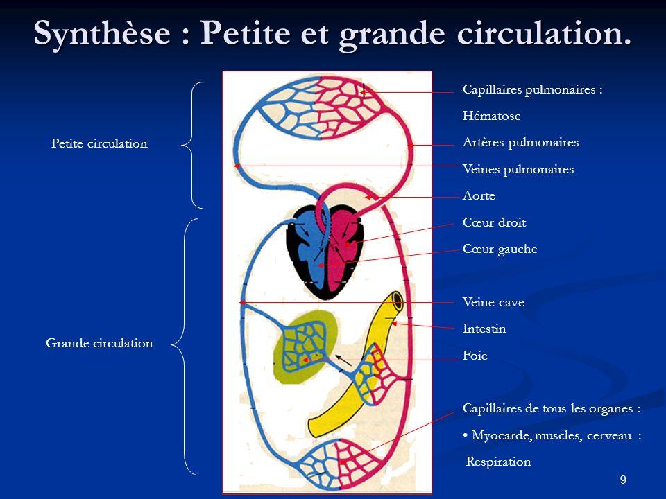 9 Synthèse : Petite et grande circulation. Petite circulation Grande circulation Capillaires pulmonaires : Hématose Artères pulmonaires Veines pulmona
