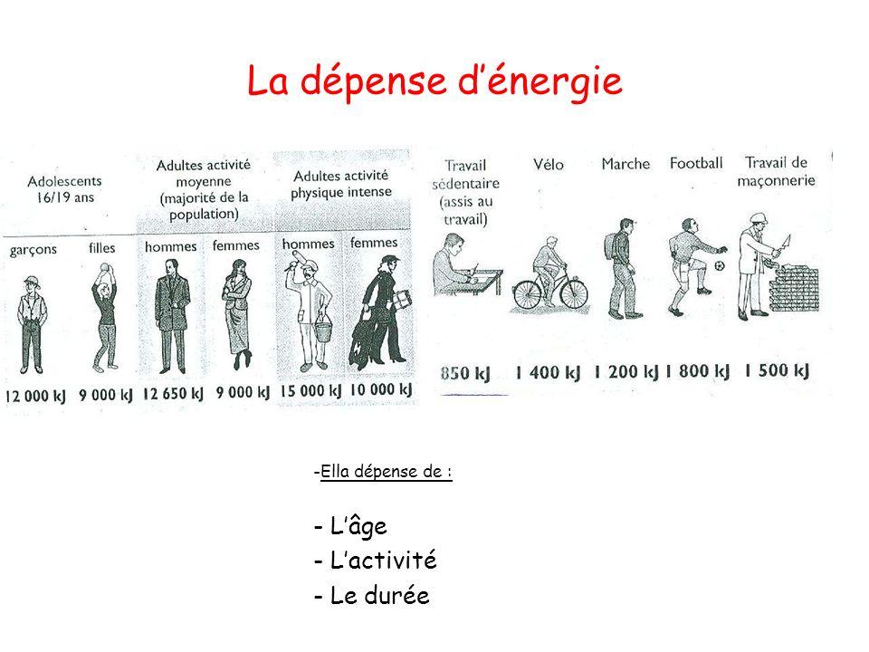 La notion déquilibre alimentaire Il existe trois cas : - Equilibre, si A = D - Exces, si A > D donc on grossit - Déficit, si A < D donc on maigrit ApportsBesoins