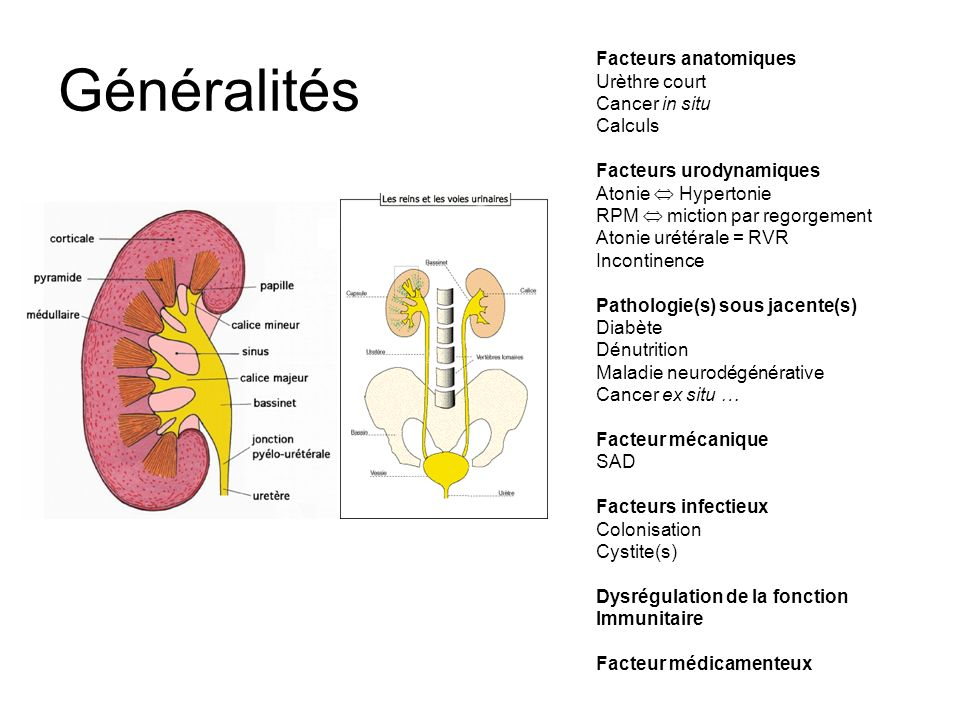 Fluoroquinolones et prostate Naber KG et al., 1993