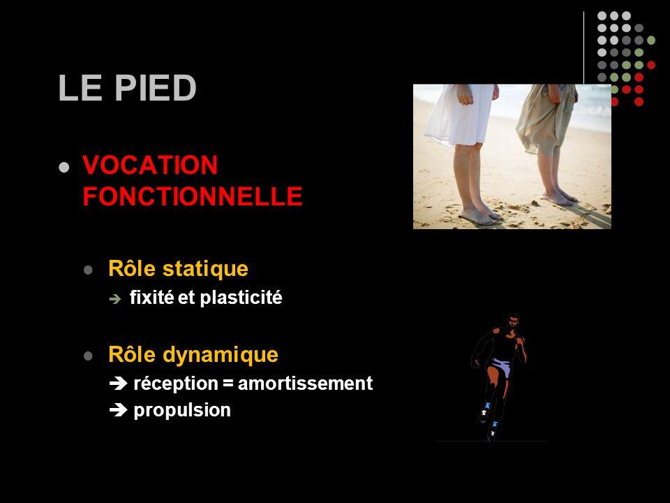 LE PIED VOCATION FONCTIONNELLE Rôle statique fixité et plasticité Rôle dynamique réception = amortissement propulsion