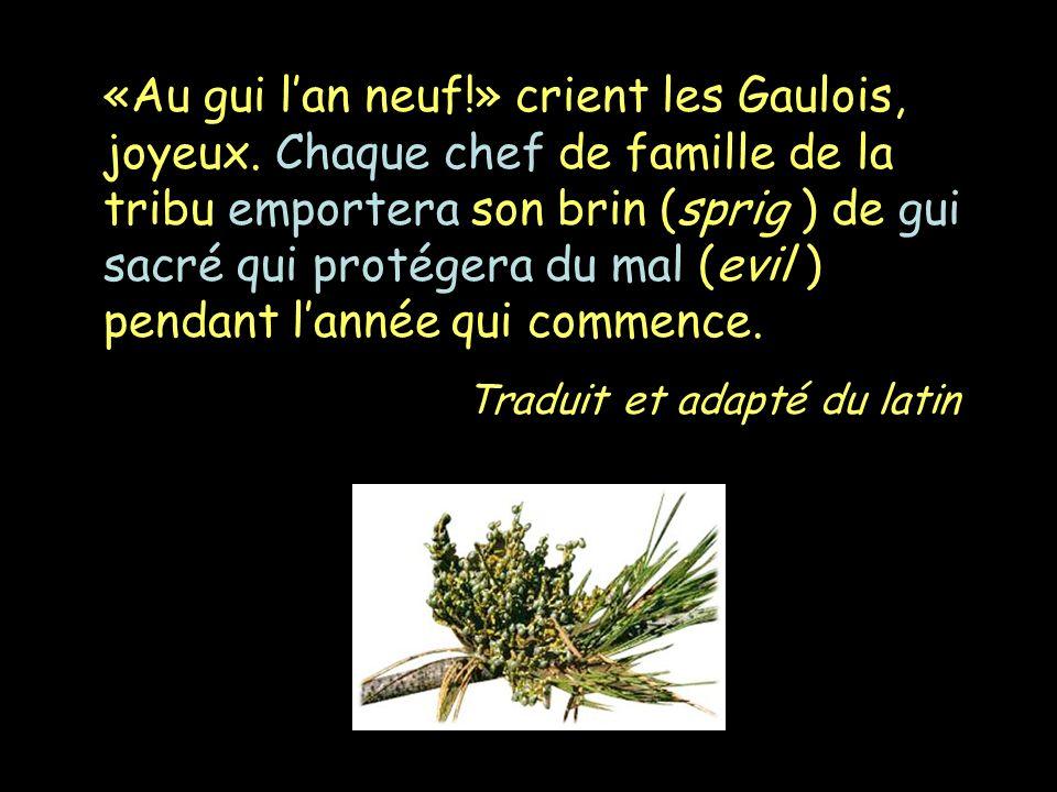 «Au gui lan neuf!» crient les Gaulois, joyeux. Chaque chef de famille de la tribu emportera son brin (sprig ) de gui sacré qui protégera du mal (evil