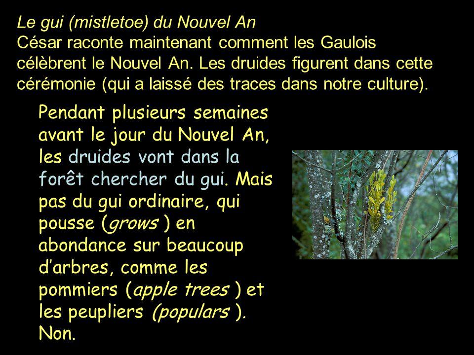 Le gui (mistletoe) du Nouvel An César raconte maintenant comment les Gaulois célèbrent le Nouvel An. Les druides figurent dans cette cérémonie (qui a