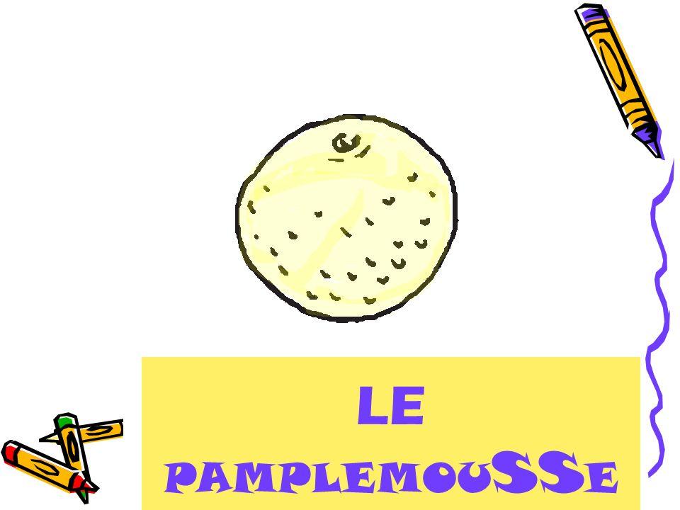 LE PAMPLEMOU SS E