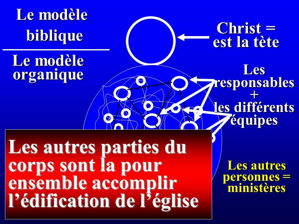 Christ = est la tète Le modèle organique biblique Les autres personnes = ministères Les autres parties du corps sont la pour ensemble accomplir lédification de léglise Lesresponsables+ les différents équipes