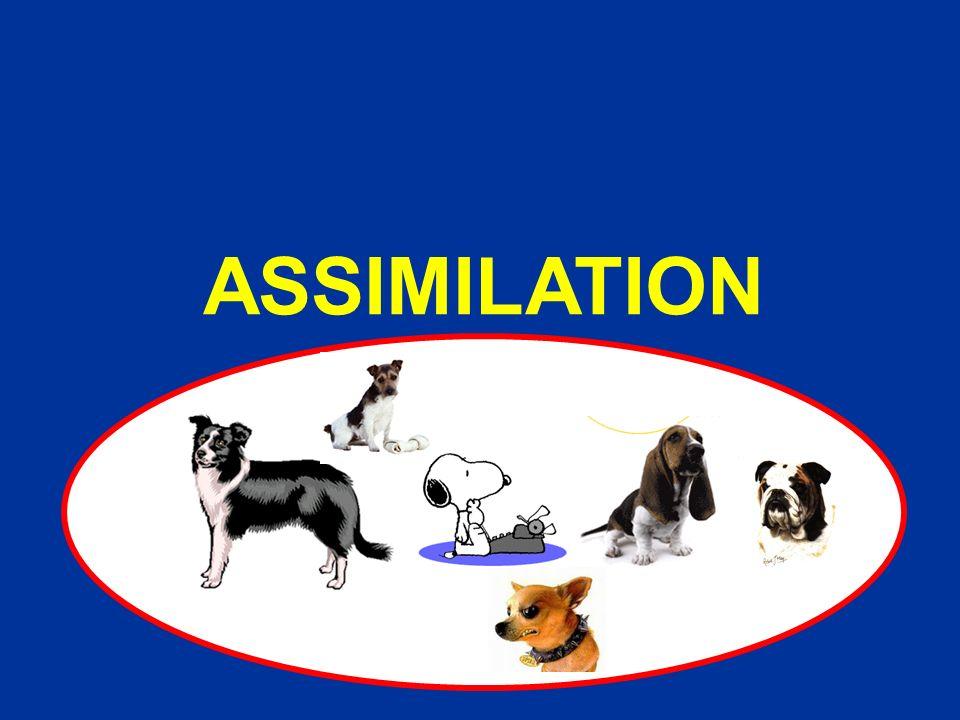 ASSIMILATION