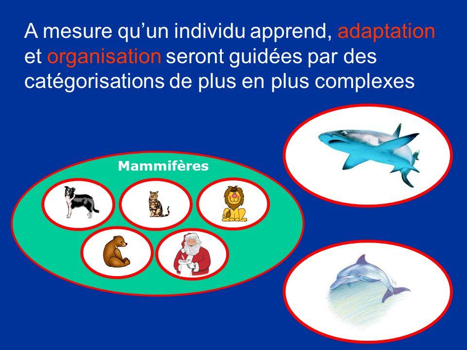 A mesure quun individu apprend, adaptation et organisation seront guidées par des catégorisations de plus en plus complexes Mammifères