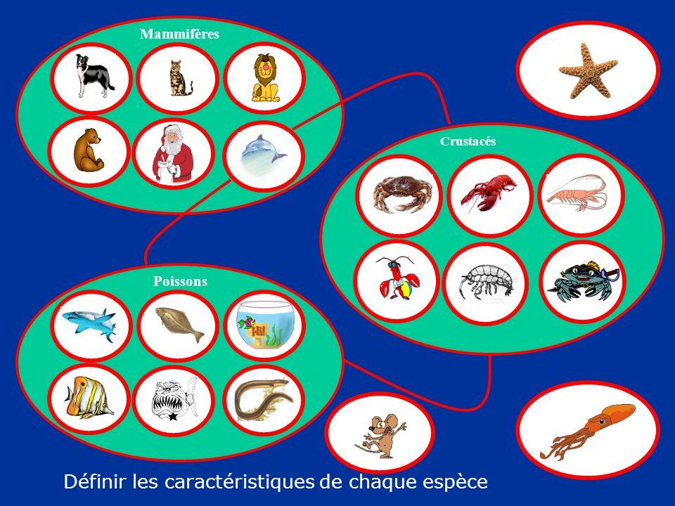 Mammifères Poissons Crustacés Définir les caractéristiques de chaque espèce
