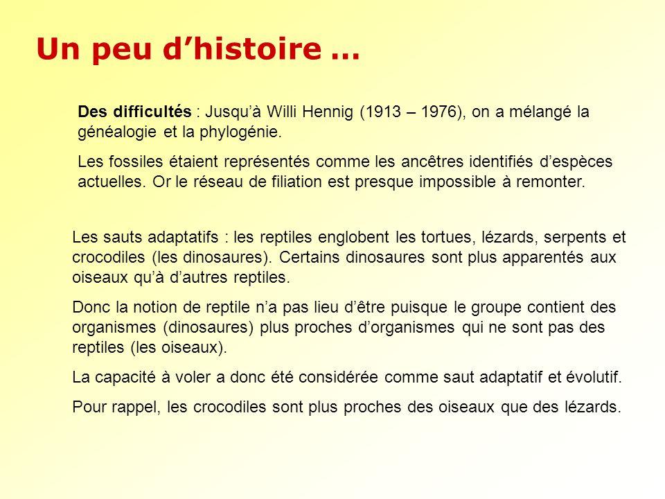 Un peu dhistoire … Des difficultés : Jusquà Willi Hennig (1913 – 1976), on a mélangé la généalogie et la phylogénie. Les fossiles étaient représentés