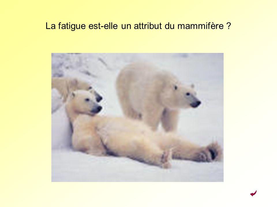 La fatigue est-elle un attribut du mammifère ?