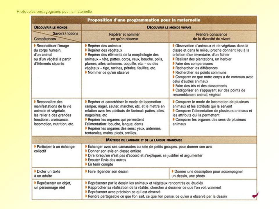 Protocoles pédagogiques pour la maternelle