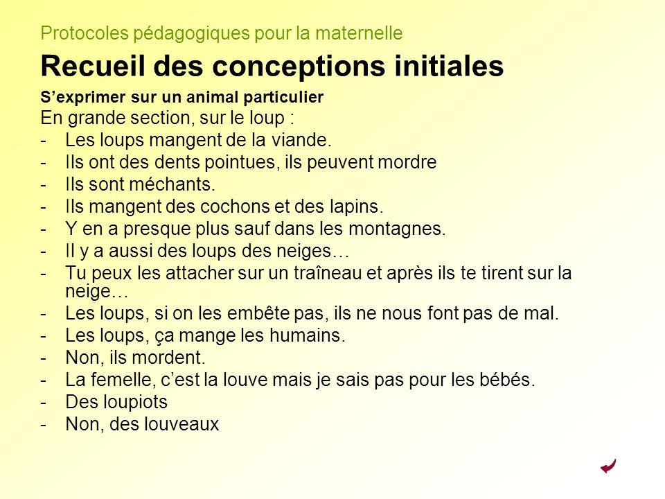 Protocoles pédagogiques pour la maternelle Recueil des conceptions initiales Sexprimer sur un animal particulier En grande section, sur le loup : -Les