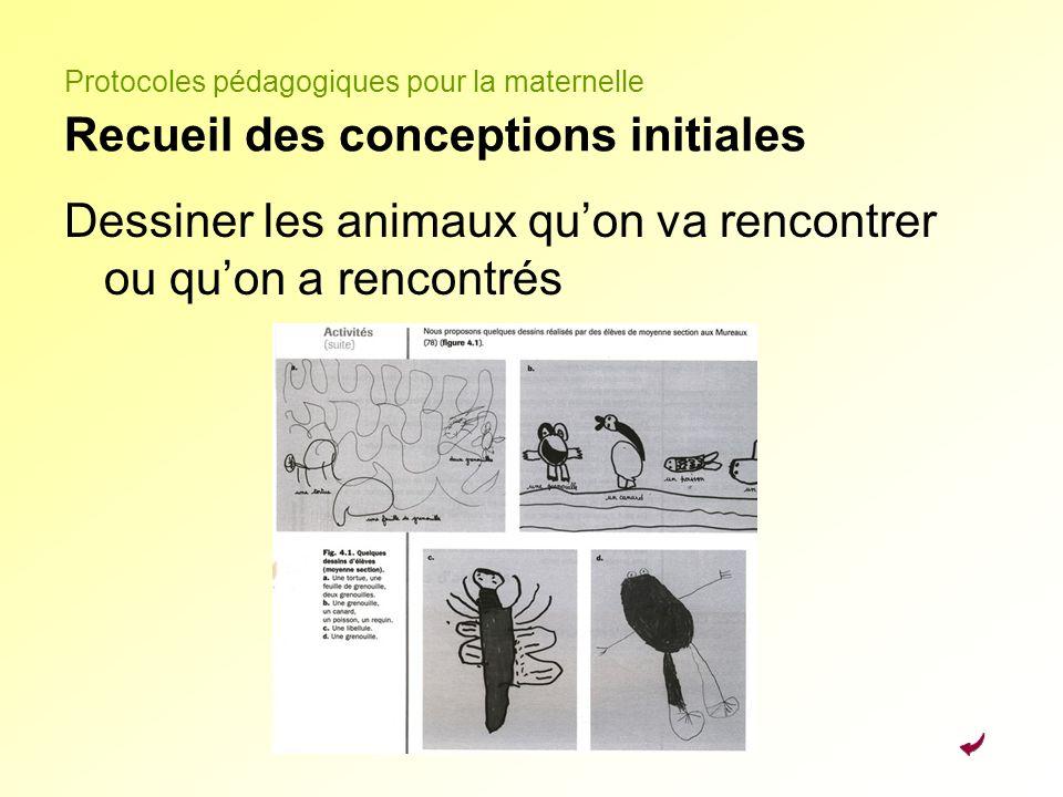 Protocoles pédagogiques pour la maternelle Recueil des conceptions initiales Dessiner les animaux quon va rencontrer ou quon a rencontrés