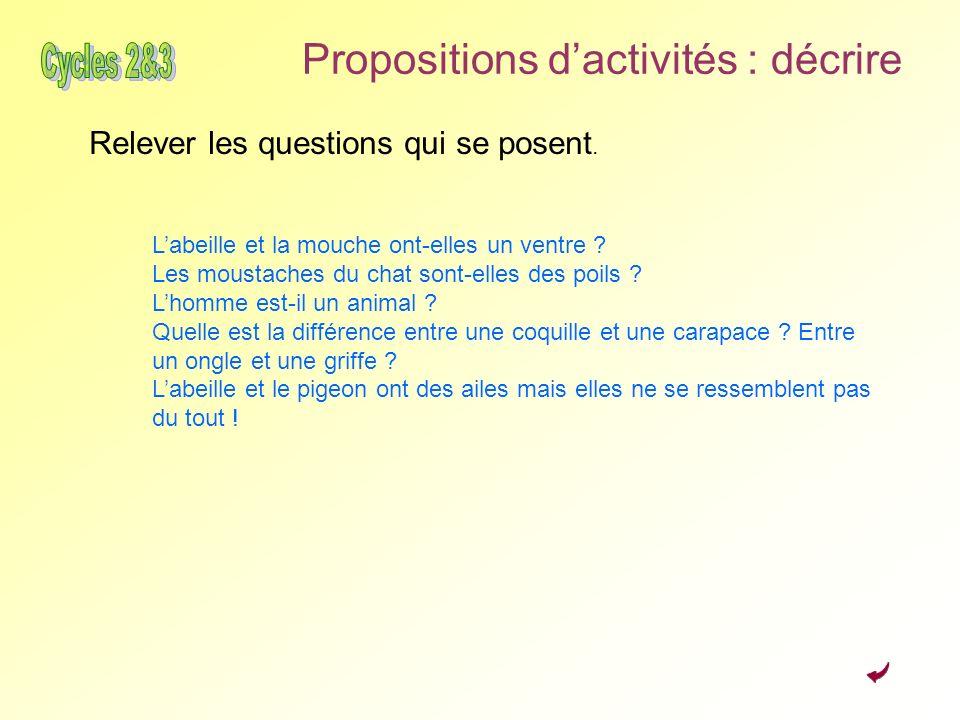 Propositions dactivités : décrire Relever les questions qui se posent. Labeille et la mouche ont-elles un ventre ? Les moustaches du chat sont-elles d