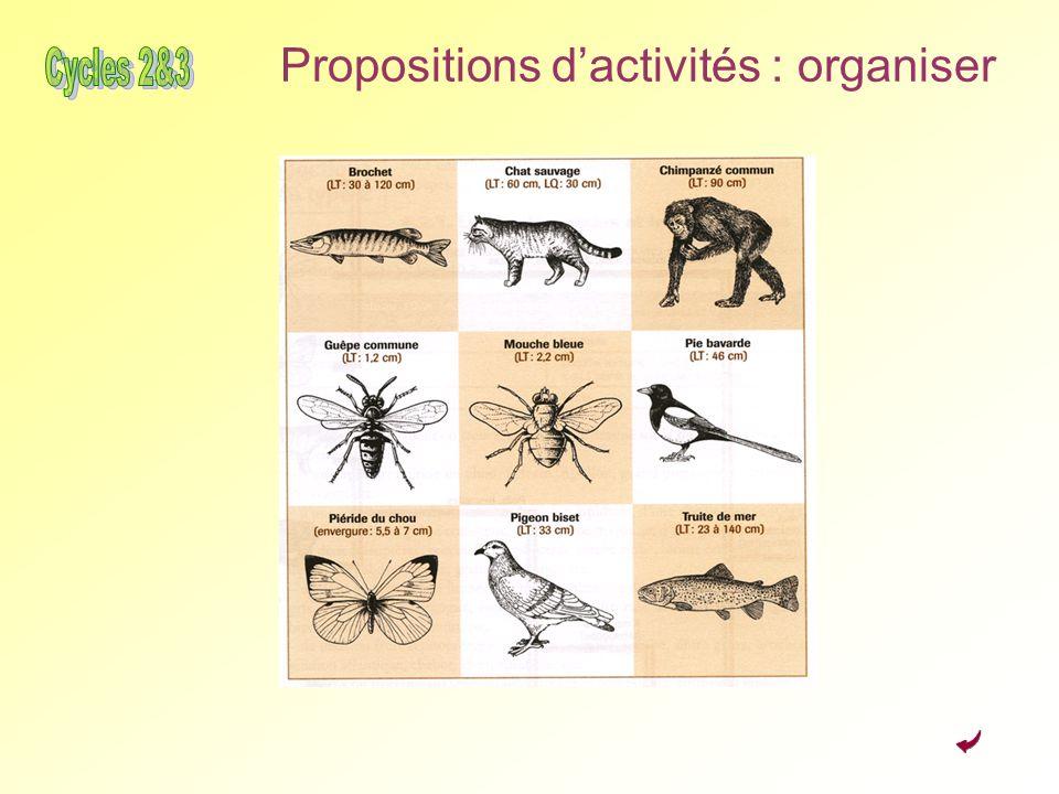 Propositions dactivités : organiser