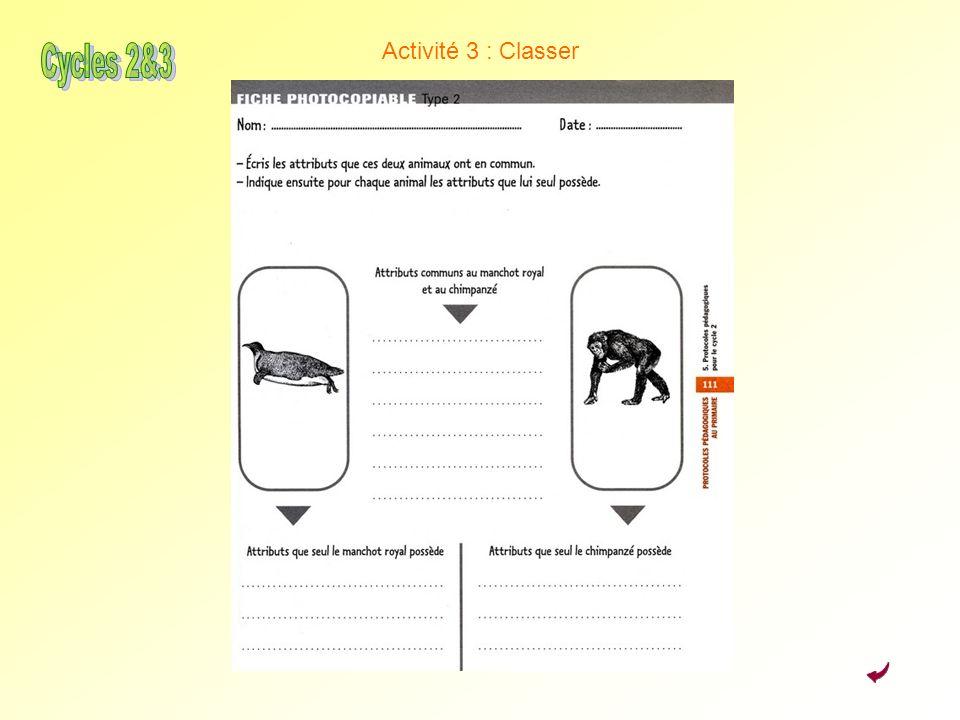 Activité 3 : Classer