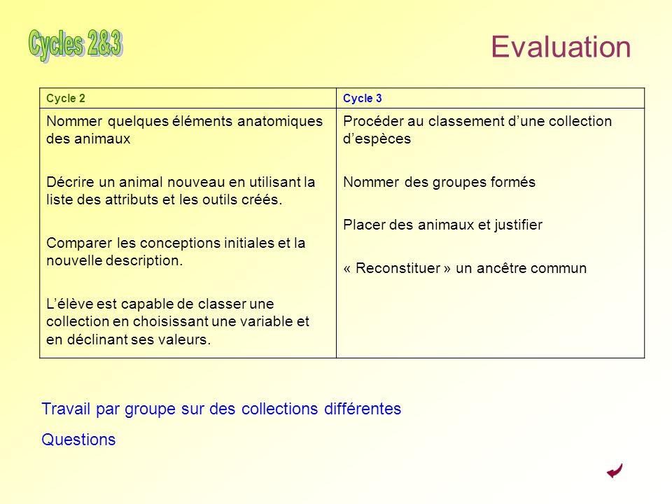 Evaluation Cycle 2Cycle 3 Nommer quelques éléments anatomiques des animaux Décrire un animal nouveau en utilisant la liste des attributs et les outils