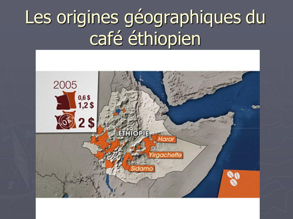 Les origines géographiques du café éthiopien