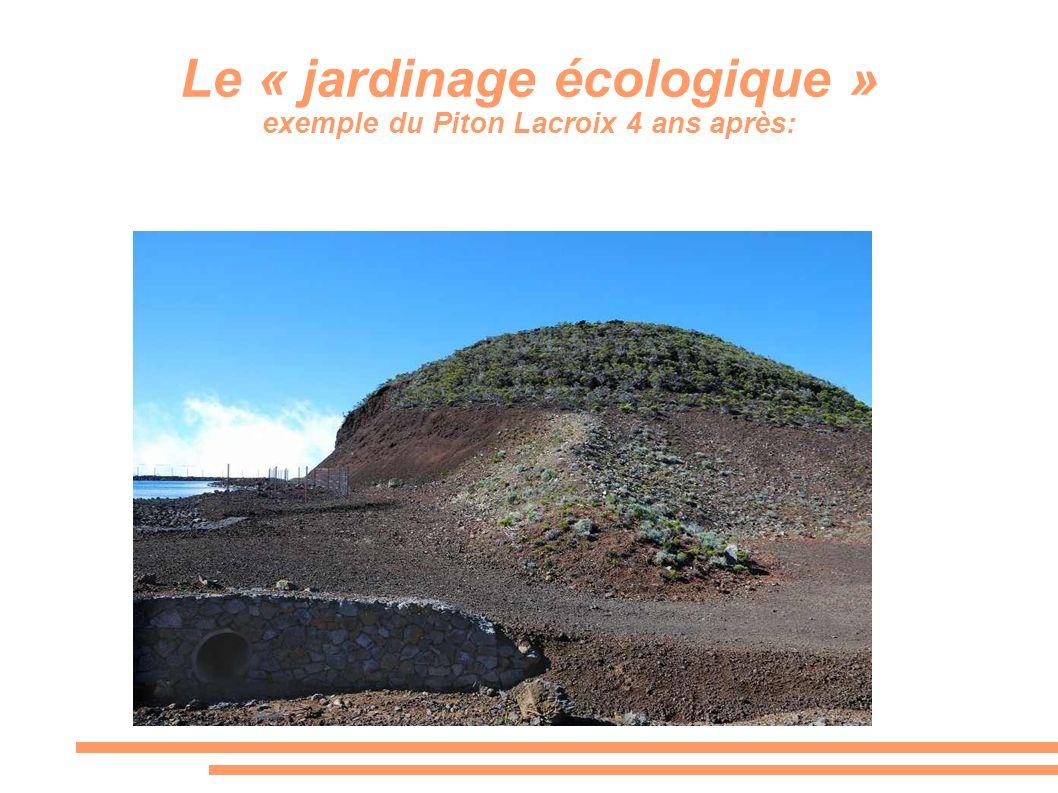 Le « jardinage écologique » exemple du Piton Lacroix 4 ans après: