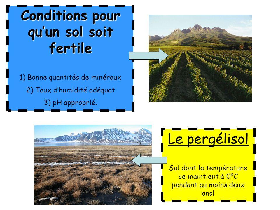Conditions pour quun sol soit fertile 1) Bonne quantités de minéraux 2) Taux dhumidité adéquat 3) pH approprié. Le pergélisol Sol dont la température