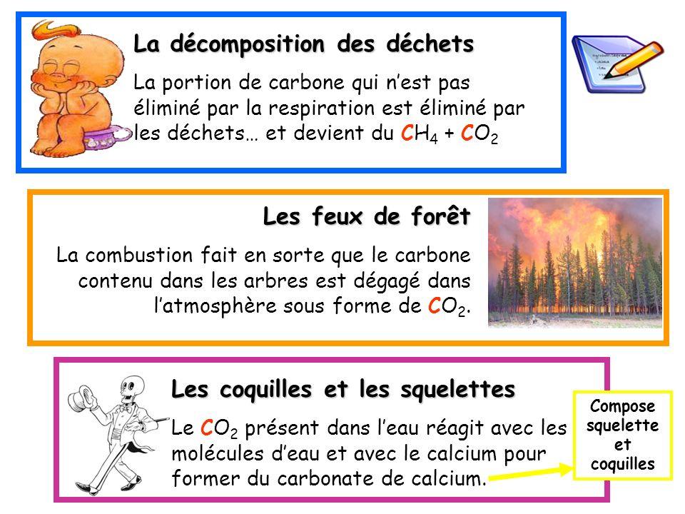 La décomposition des déchets La portion de carbone qui nest pas éliminé par la respiration est éliminé par les déchets… et devient du CH 4 + CO 2 Les
