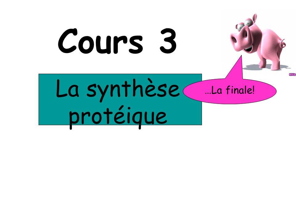 Cours 3 La synthèse protéique …La finale!