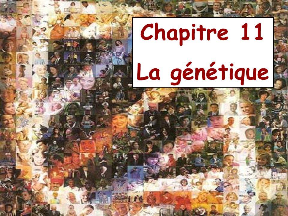 Chapitre 11 La génétique