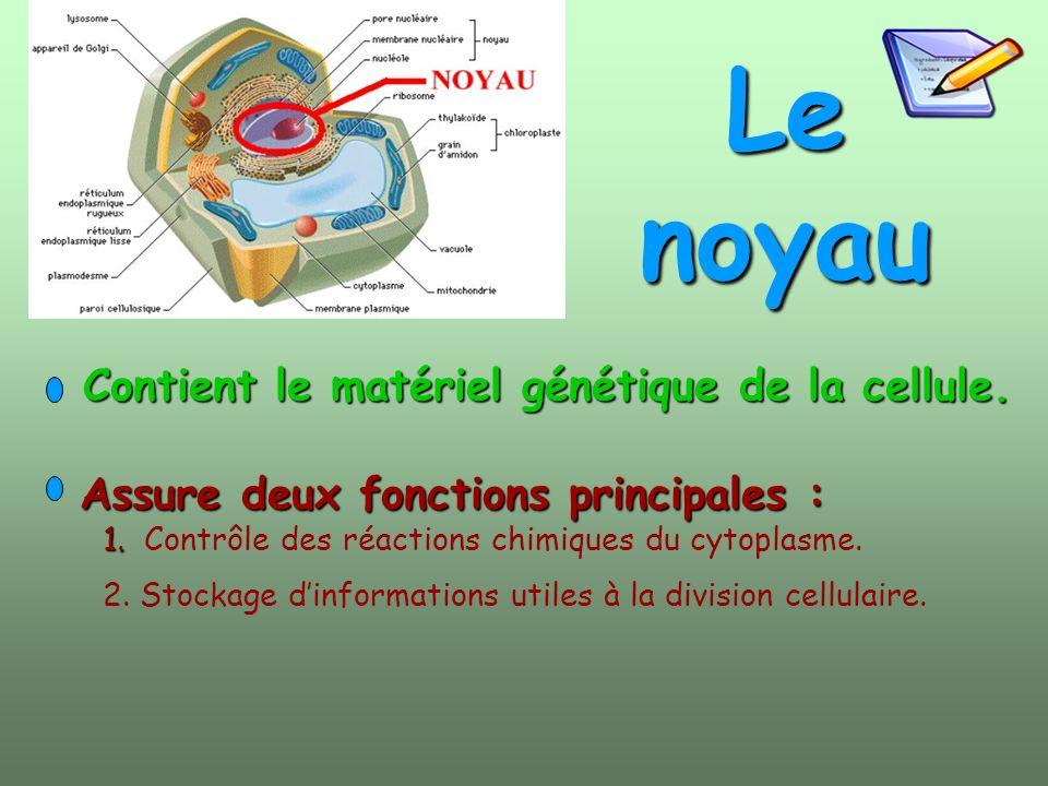 Le noyau Assure deux fonctions principales : Assure deux fonctions principales : 1. 1. Contrôle des réactions chimiques du cytoplasme. 2. Stockage din