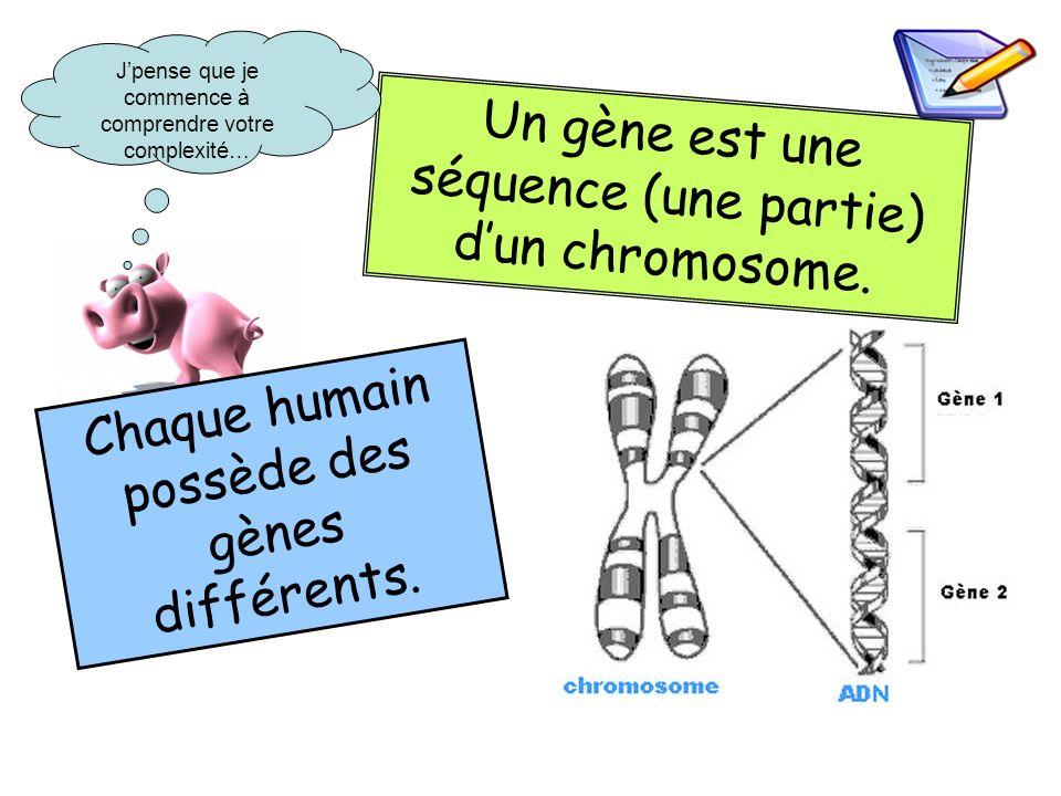 Un gène est une séquence (une partie) dun chromosome. Chaque humain possède des gènes différents. Jpense que je commence à comprendre votre complexité