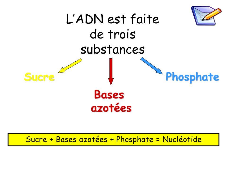LADN est faite de trois substances SucrePhosphate Basesazotées Sucre + Bases azotées + Phosphate = Nucléotide