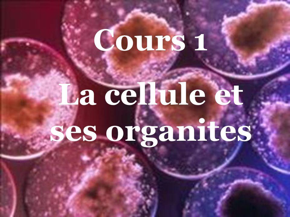 Cours 1 La cellule et ses organites