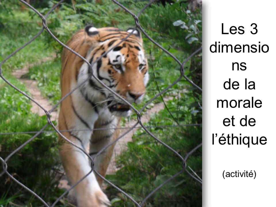 Les 3 dimensio ns de la morale et de léthique (activité)
