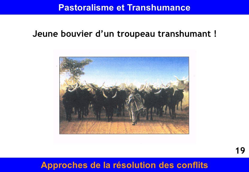 Jeune bouvier dun troupeau transhumant ! Approches de la résolution des conflits Pastoralisme et Transhumance 19