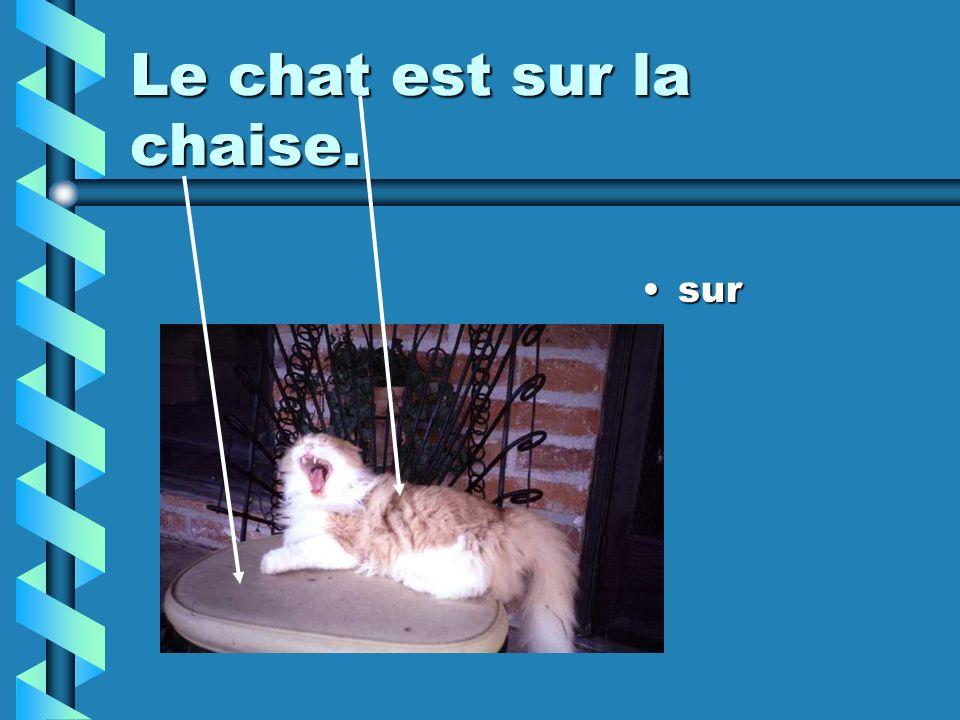 Le chat est sur la chaise. sur