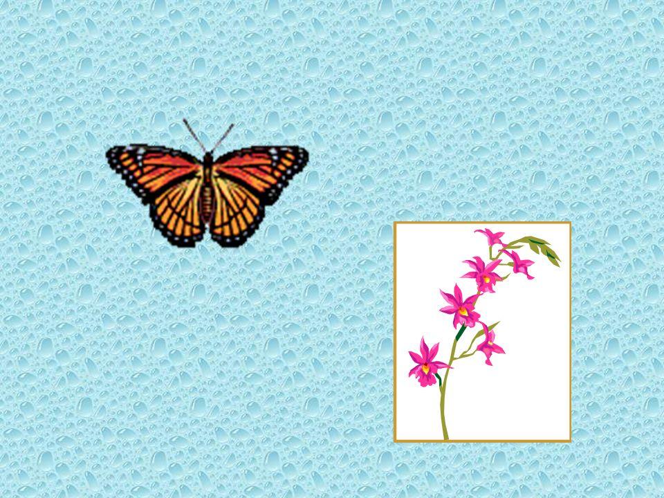 Donnez un exemple personel de la philosophie de la fleur dans votre vie……