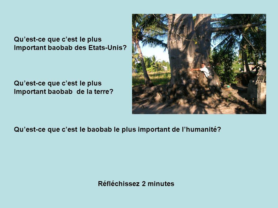 Quest-ce que cest le plus Important baobab des Etats-Unis? Quest-ce que cest le plus Important baobab de la terre? Quest-ce que cest le baobab le plus