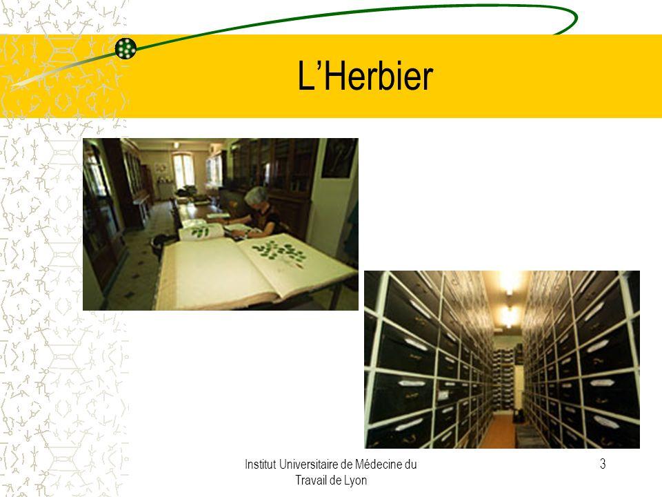 Institut Universitaire de Médecine du Travail de Lyon 4 LHerbier