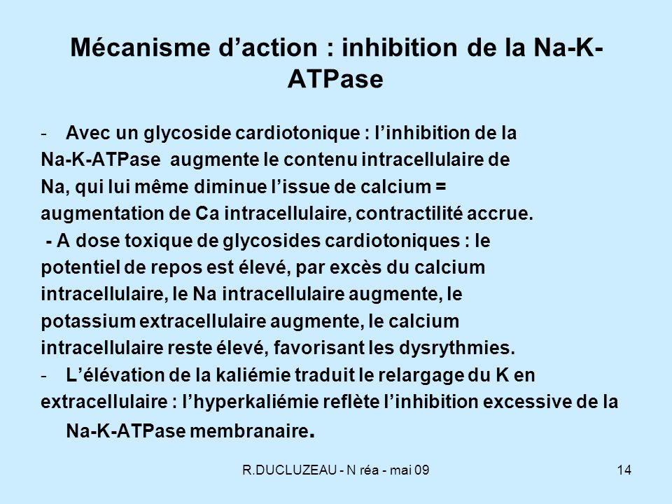 R.DUCLUZEAU - N réa - mai 0915 Effets des digitaliques - effet inotrope positif, augmentation de lautomaticité, - diminution de la conduction du nœud sinusal et du nœud AV par effet direct et par effet vagal.