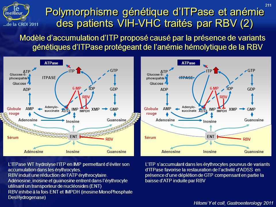 le meilleur …de la CROI 2011 Polymorphisme génétique dITPase et anémie des patients VIH-VHC traités par RBV (2) Modèle daccumulation dITP proposé causé par la présence de variants génétiques dITPase protégeant de lanémie hémolytique de la RBV Hitomi Y et coll, Gastroenterology 2011 LITPase WT hydrolyse lITP en IMP permettant déviter son accumulation dans les érythrocytes.