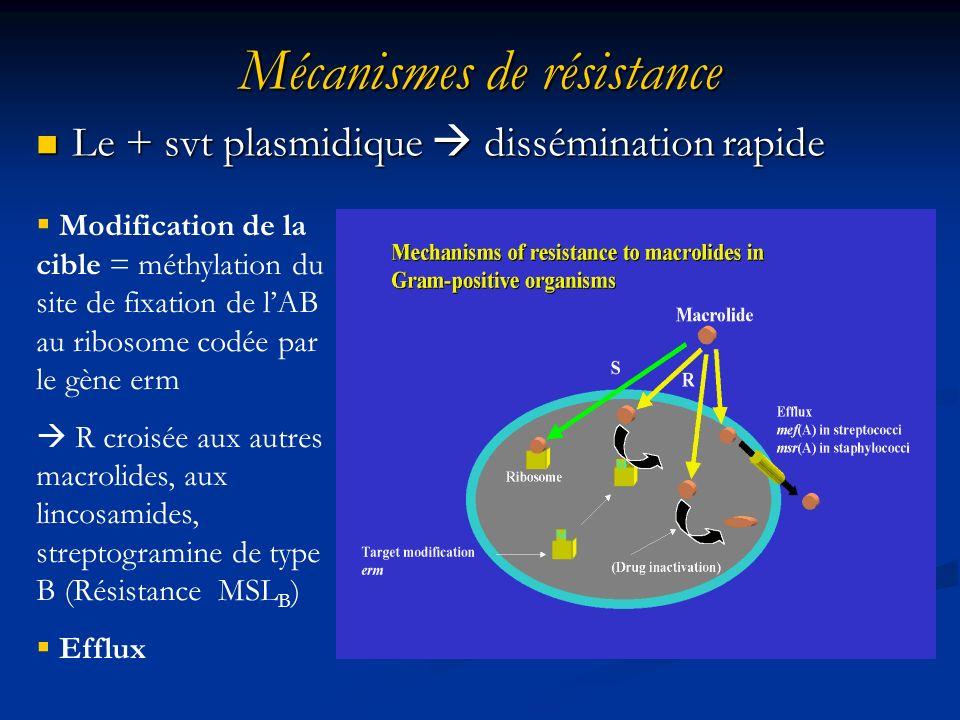 Mécanismes de résistance Le + svt plasmidique dissémination rapide Le + svt plasmidique dissémination rapide Modification de la cible = méthylation du site de fixation de lAB au ribosome codée par le gène erm R croisée aux autres macrolides, aux lincosamides, streptogramine de type B (Résistance MSL B ) Efflux