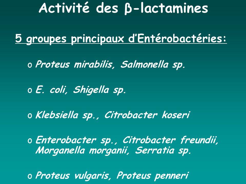 Activité des β-lactamines 5 groupes principaux dEntérobactéries: oProteus mirabilis, Salmonella sp. oE. coli, Shigella sp. oKlebsiella sp., Citrobacte