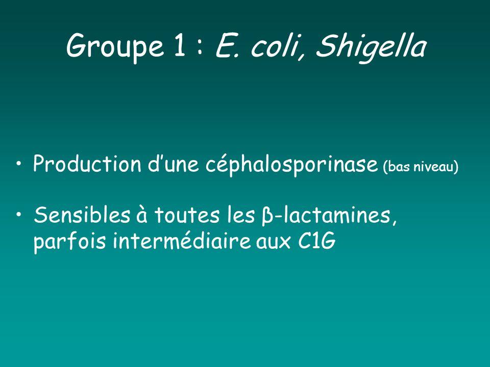 Groupe 1 : E. coli, Shigella Production dune céphalosporinase (bas niveau) Sensibles à toutes les β-lactamines, parfois intermédiaire aux C1G
