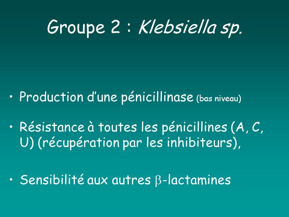 Groupe 2 : Klebsiella sp. Production dune pénicillinase (bas niveau) Résistance à toutes les pénicillines (A, C, U) (récupération par les inhibiteurs)