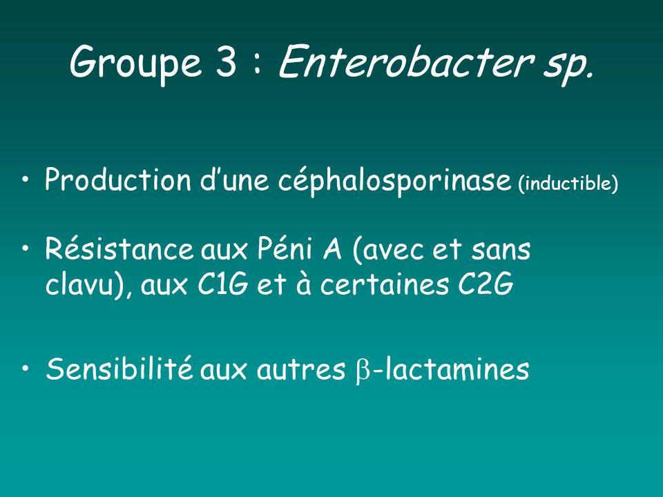 Groupe 3 : Enterobacter sp. Production dune céphalosporinase (inductible) Résistance aux Péni A (avec et sans clavu), aux C1G et à certaines C2G Sensi